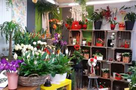 Fleuriste - Héricourt en Caux