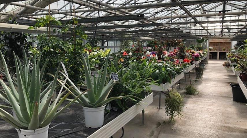 Production de plants à reprendre en Charente-Maritime